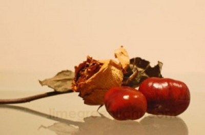 conkers with rose
