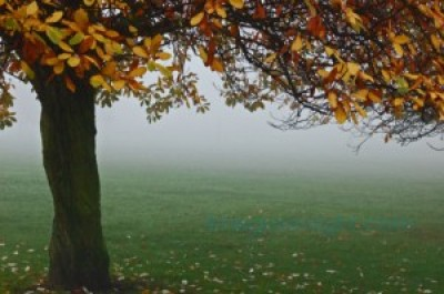 misty morning in regent's park during autumn