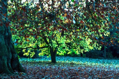 autumn leaves and light in Regent's Park London