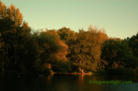 looking across the lake in St James's Park at sunset in summer