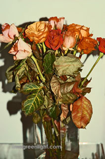 dried red and yellow roses in vase