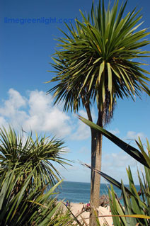Yucca trees near beach in St Ives Cornwall